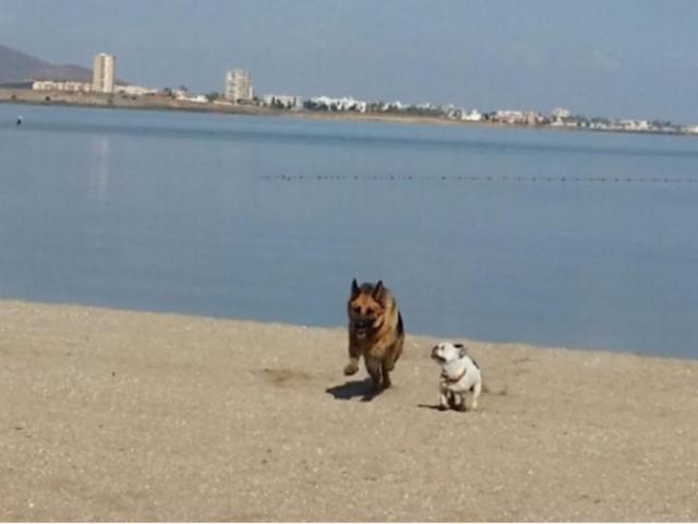 1 línea playa